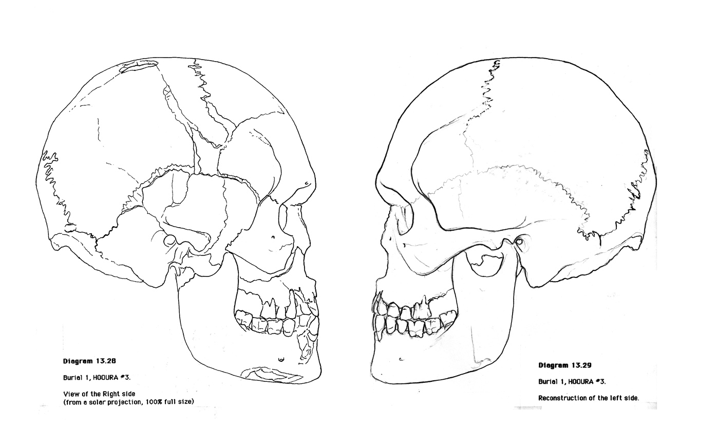 Skull Anatomy Worksheets http://printablecolouringpages.co.uk/?s=skull%20anatomy